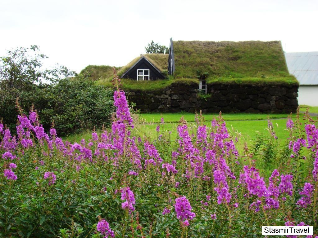Исландская землянка в окружении люпинов
