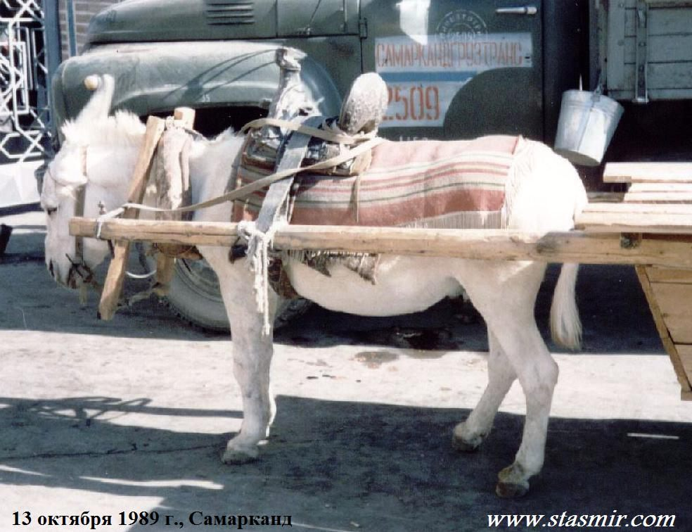Samarkand 13 October 1989, Самарканд 1989 год, стасмир, Photo Stasmir, Stanislav Smirnov