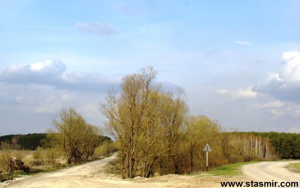 Дерево, весна в Тульской области, Фото Стасмир, Photo Stasmir