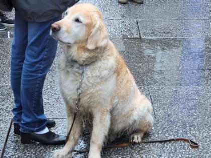 собака на улице Осло, фото Стасмир, Photo Stasmir
