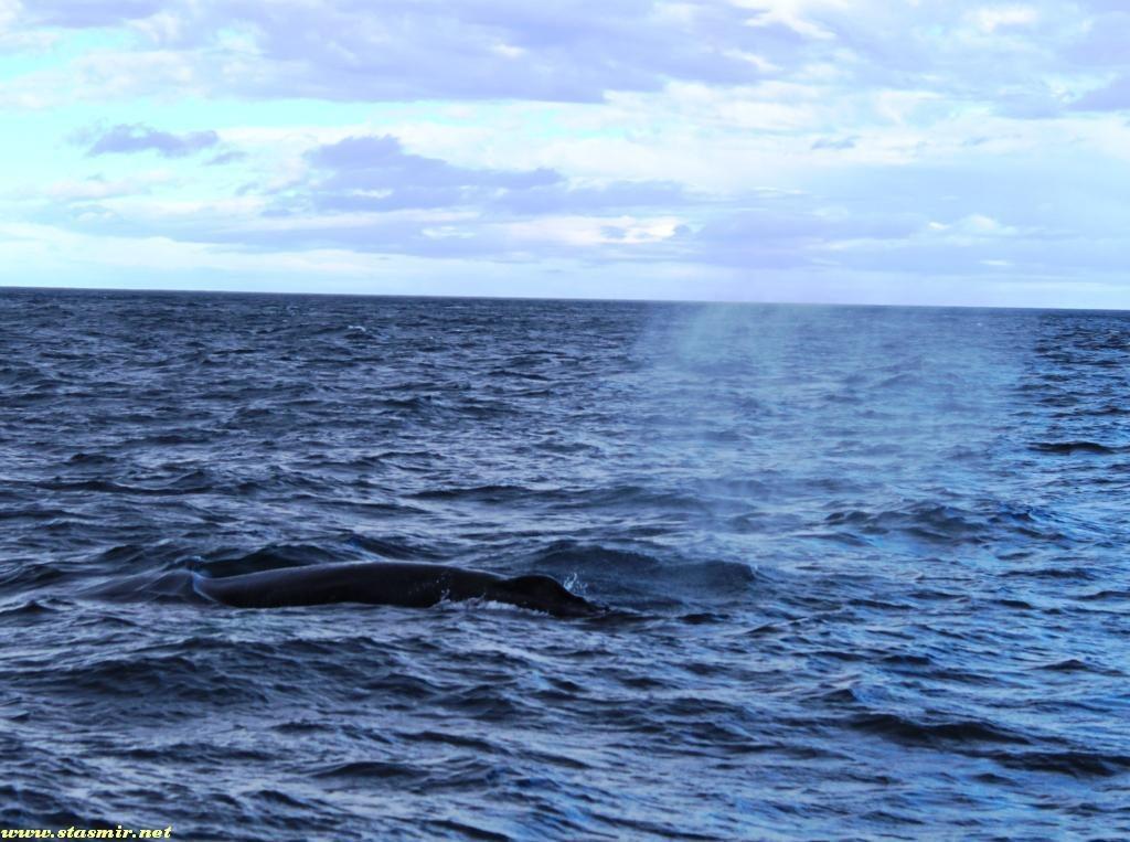 whale breath