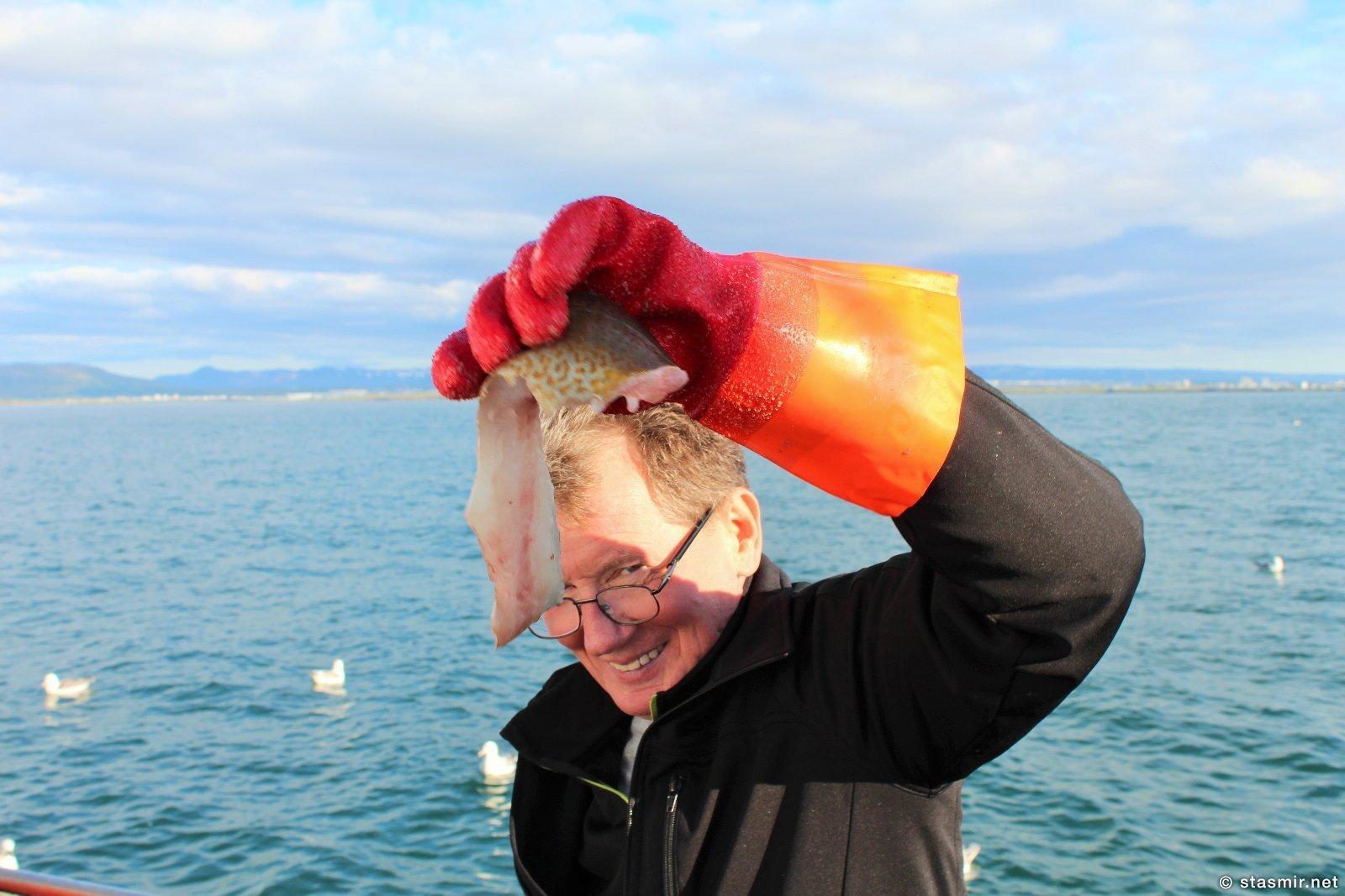 Сигги разделывает треску: морская рыбалка из Рейкьявика, Исландия, фото Стасмир, photo Stasmir