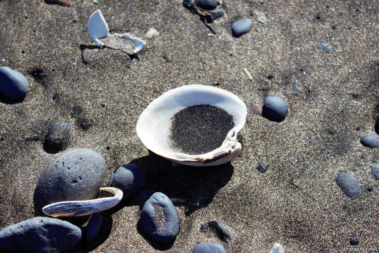 ракушка на пляже на полуострове Снайфедльснес, фото Стасмир, photo Stasmir