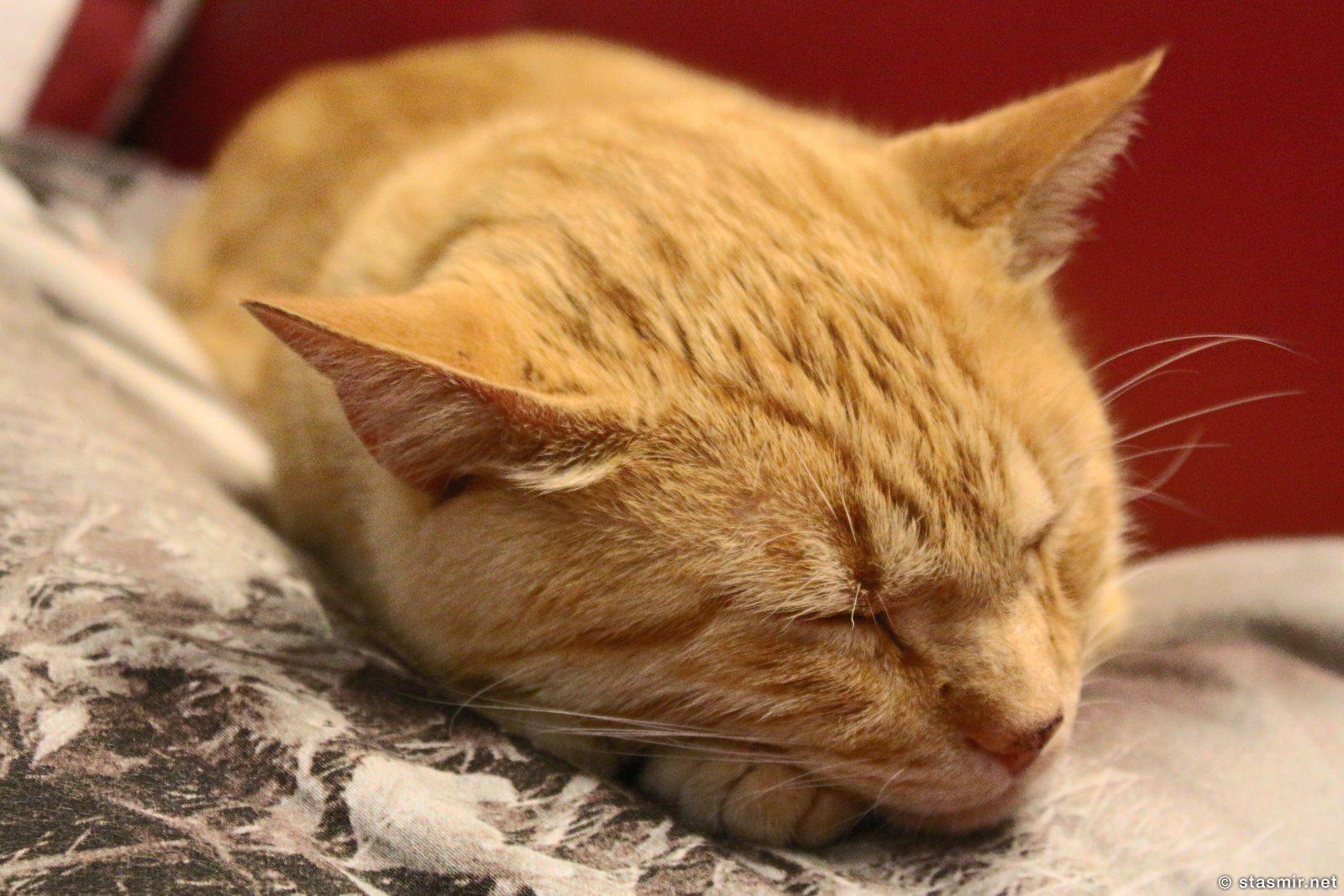 котик под заголовок поста, фото Стасмир, photo Stasmir