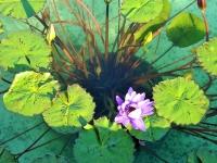 Сад цветов на озере Маджоро в Ботаническом саду Вилла Таранто, Lago Maggiore, not Garda, озеро Маджоре, Лаго-Маджоре, а не Гарда, фото Стасмир, Photo Stasmir, Каннобио, Lago Maggiore