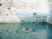 floating ducks, lake garda, домик для уток на озере Гарда, Италия, фото Стасмир, Photo Stasmir