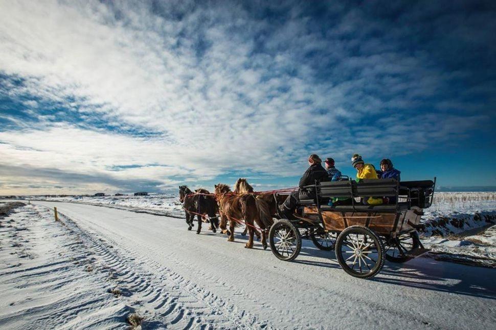 Лошадиная упряжка Беттины, фото взято с сайта исландской газеты Morgunblaðið