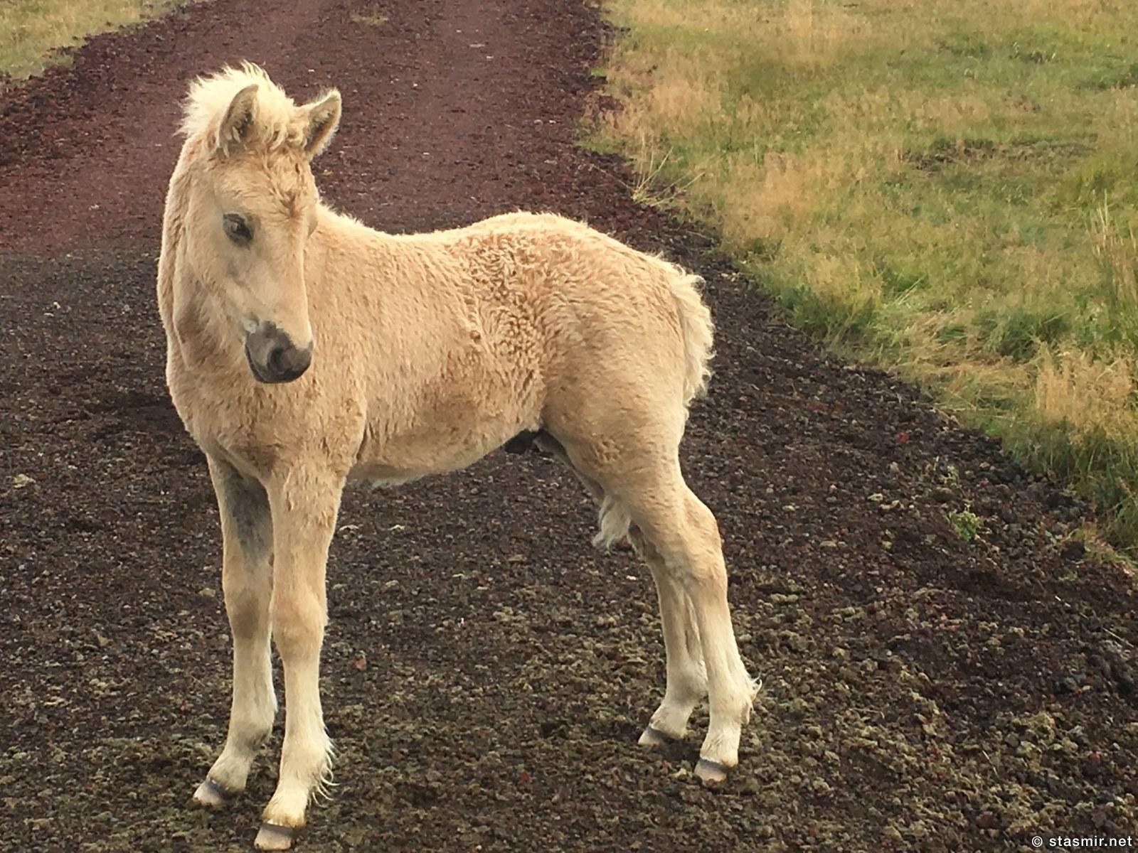 рожденный бегать не станет ползать, фото Стасмир, Южная Исландия, фото Стасмир, photo Stasmir