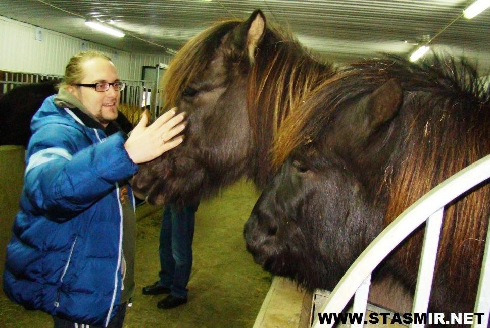 horse powers
