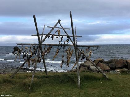 Сушится пикша у океана в Исландии, фото Стасмир, photo Stasmir