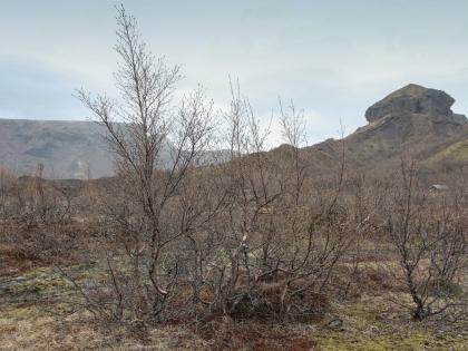 Лес Тора. Пешие маршруты на базе Тоурсмёрк, фото Стасмир, Торсморк, Þórsmörk, фото Стасмир, photo Stasmir, Thórsmörk