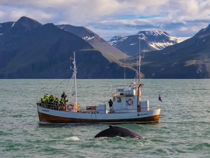 Киты и кони: морская и конная прогулки в поисках красоты