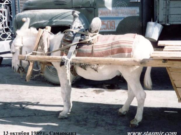 Ослик, 13 октября 1989 г., Самарканд
