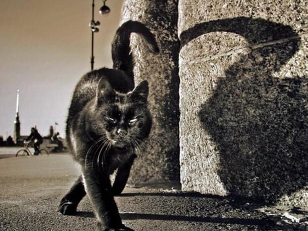 кошки в Питере