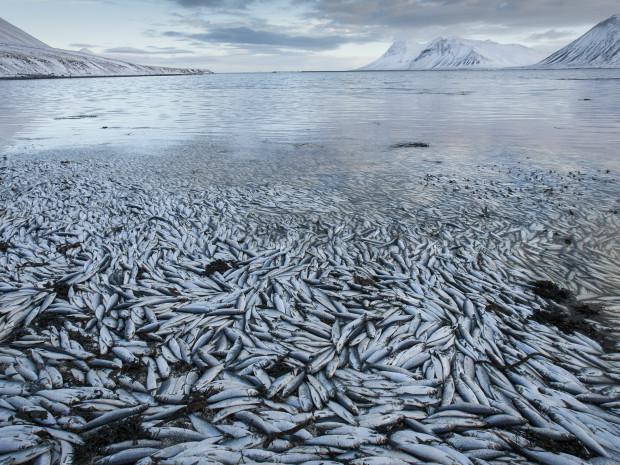 Самоубийство селедки в Исландии, Западная Исландия, Тур Магический Полуостров