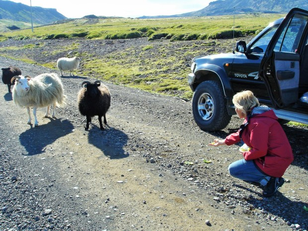 Исландия - страна баранов
