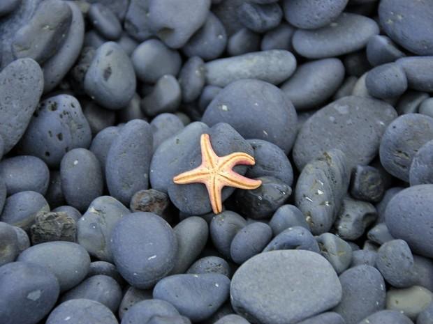 Еще одна морская звезда на пляже Дьюпалоун в Западной Исландии, фото Стасмир, Photo Stasmir