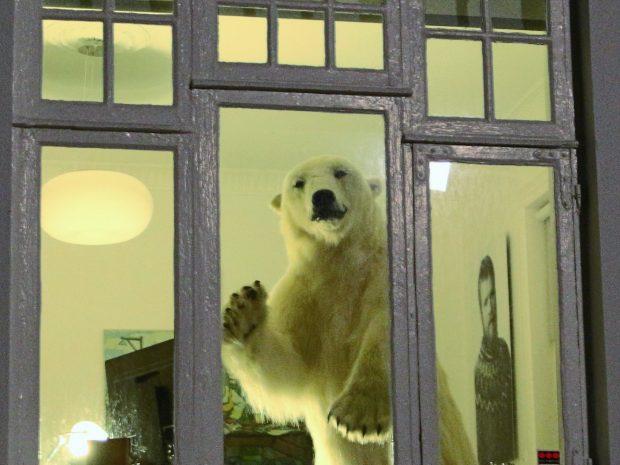Белый медведь в окне дома в Рейкьявике, фото Стасмир, Photo Stasmir