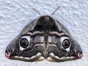 Бабочка в Португалии, фото Стасмир, Photo Stasmir